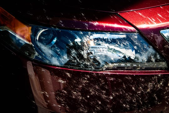 The front of a car is covered in lovebugs at the Auto Spa car wash in Naples on Friday, May 10, 2019. The bugs are an invasive species found in the southeastern United States,