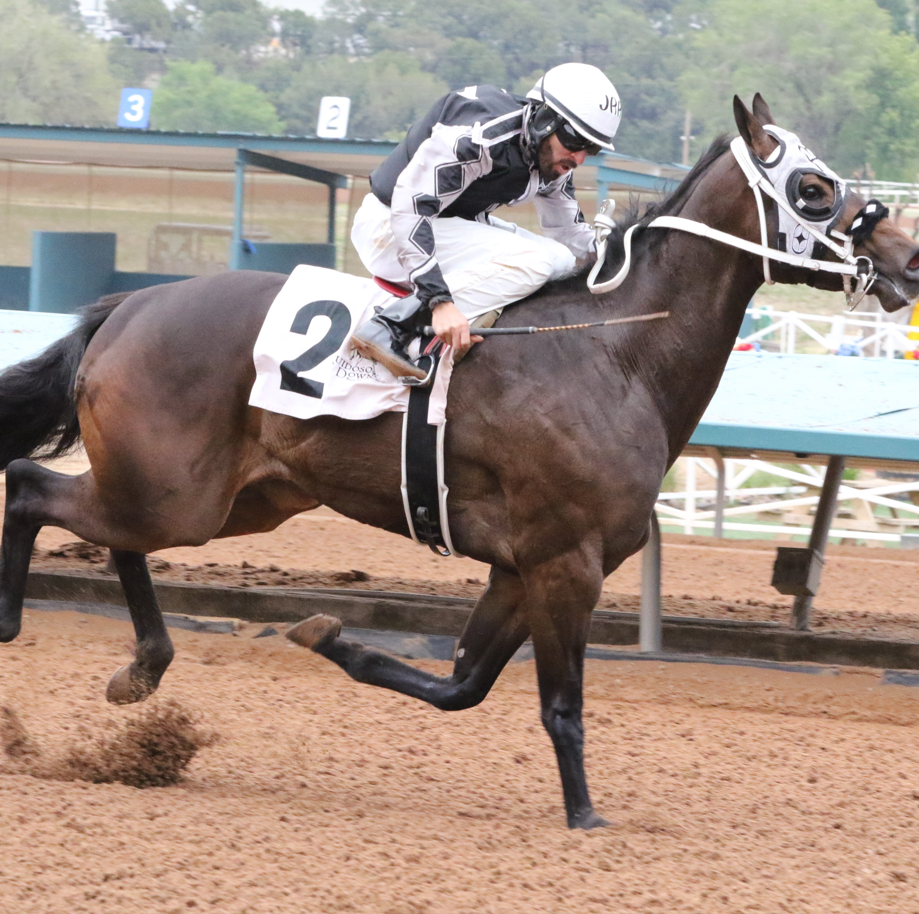 Valiant Tiberias highlights opening day as top Maiden Stakes qualifier at Ruidoso Downs