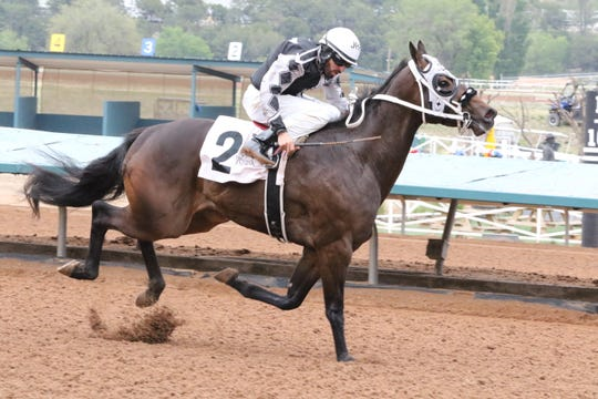 Valiant Tiberias races in the seventh Maiden Stakes Trial Race at Ruidoso Downs on Friday. Tiberias finished with the top overall time of 17.332 and will return May 27 as one of the top 10