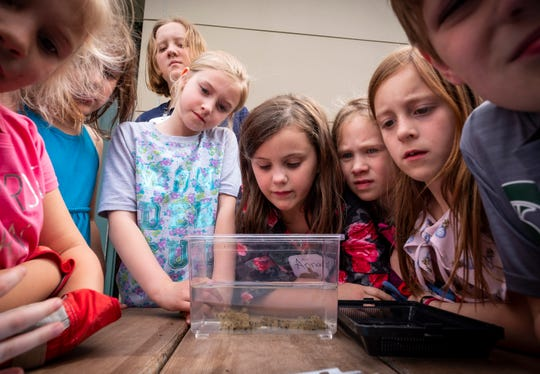 After completing a frog migration scavenger hunt, a group of students in Memphis Elementary's Junior Naturalist Club get a look at some tadpole eggs Thursday, May 9, 2019 at Memphis Elementary School.