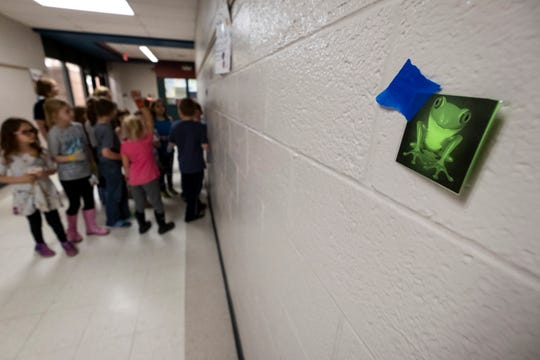 A group of students follow clues through the hallways of Memphis Elementary School Thursday, May 9, 2019 during a meeting of the school's Junior Naturalist Club. The scavenger hunt exercise is designed to teach students about frog migration.