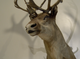 A taxidermied caribou is posed inside the  Richard M Nixon Park Nature Center in York County.