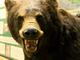 A taxidermied black bear is posed inside the  Richard M Nixon Park Nature Center in York County.