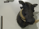 A taxidermied warthog is posed inside the  Richard M Nixon Park Nature Center in York County.