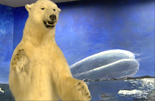 A polar bear is posed inside the  Richard M Nixon Park Nature Center in York County.