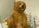 A taxidermied kodiak bear is posed inside the  Richard M Nixon Park Nature Center in York County.