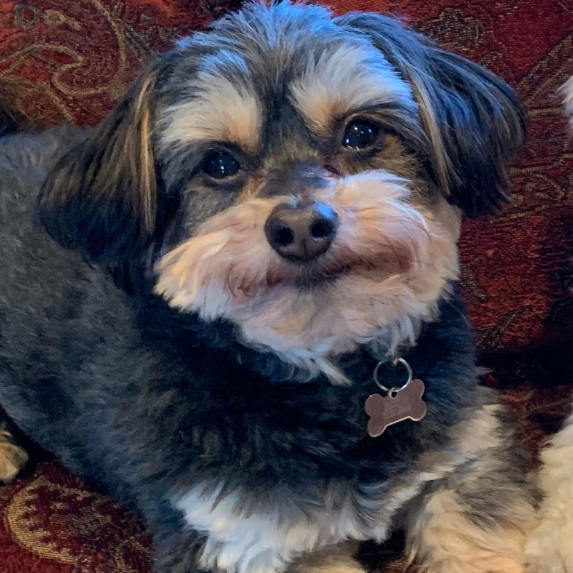 A dog's been missing for months. Now, his collar was found with a flier the family posted.