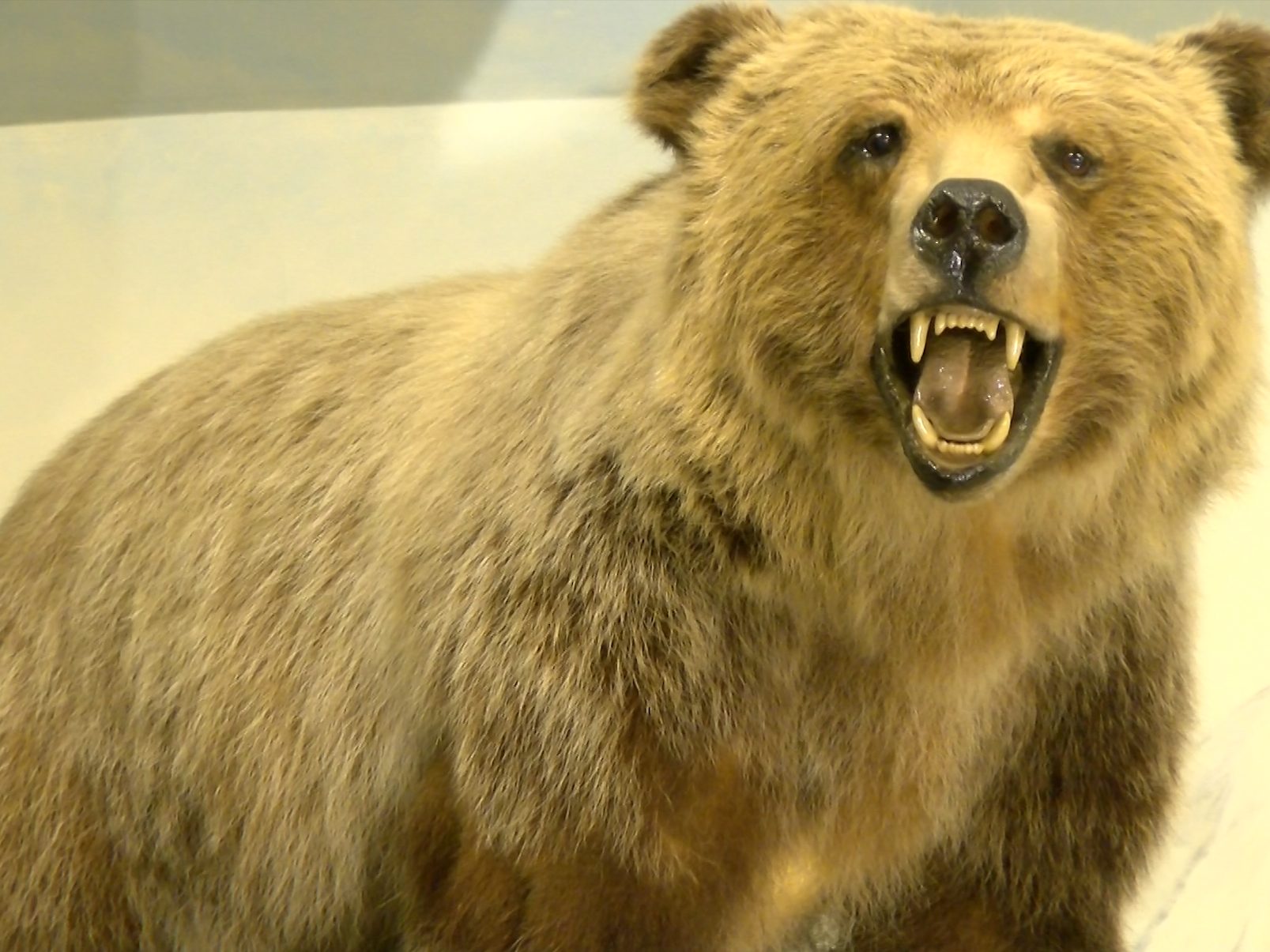 A taxidermied bear is posed inside the  Richard M Nixon Park Nature Center in York County.