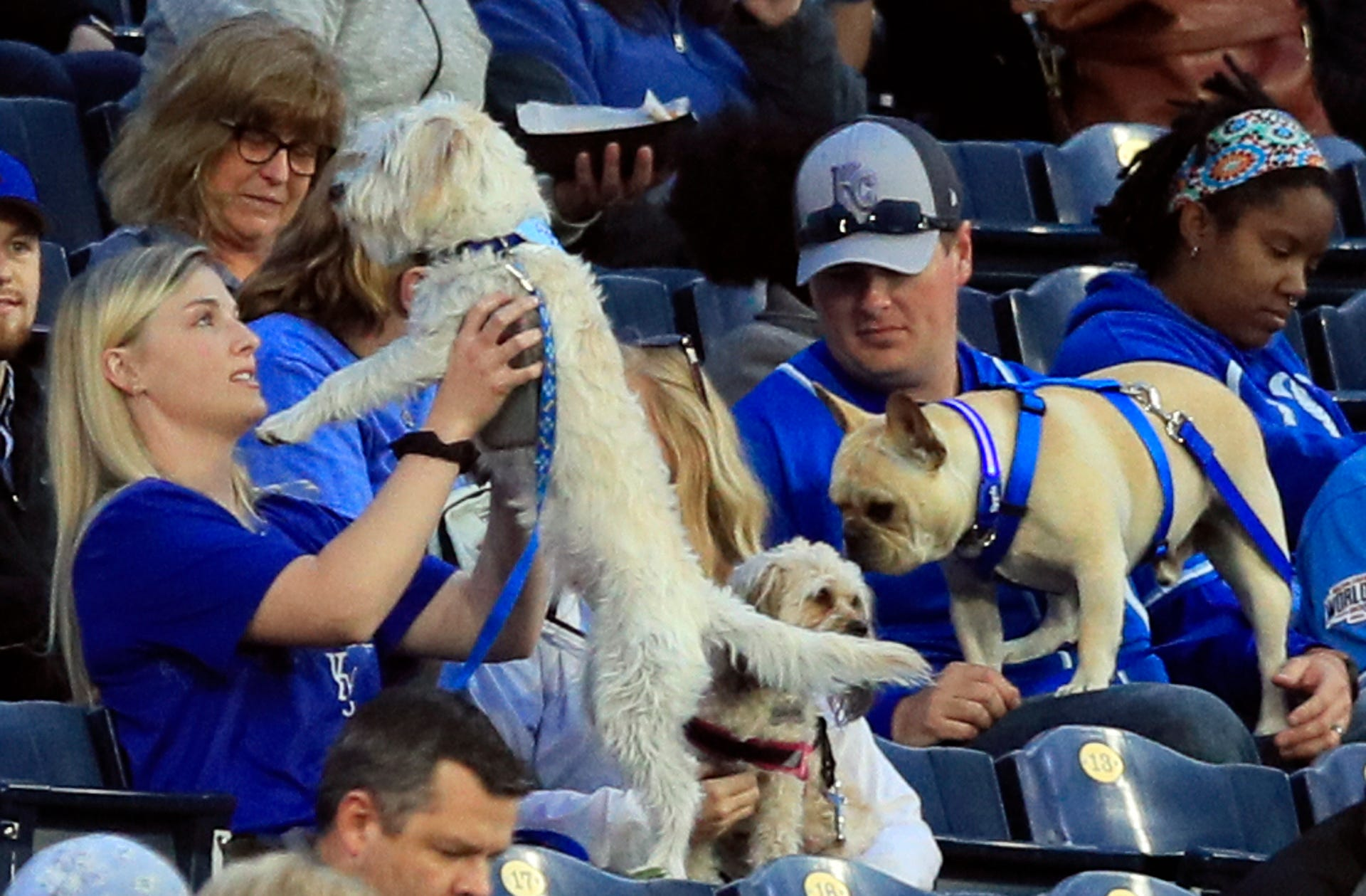 "April 29: Fans hold their dogs during the game between the Kansas City Royals and the Tampa Bay Rays at Kauffman Stadium. It was ""Bark at the Park"" night at the stadium."