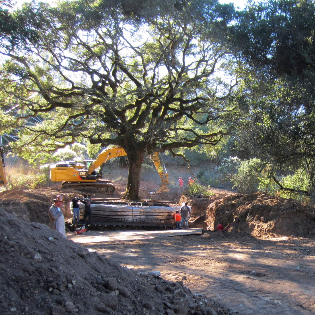 Judge: California couple must pay nearly $600k for uprooting, killing an ancient oak tree