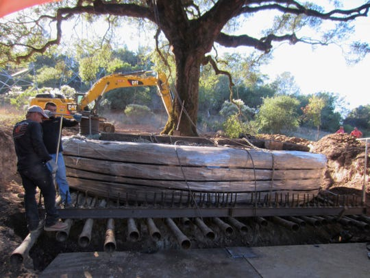 The 180-year-old heritage oak tree being excavated.