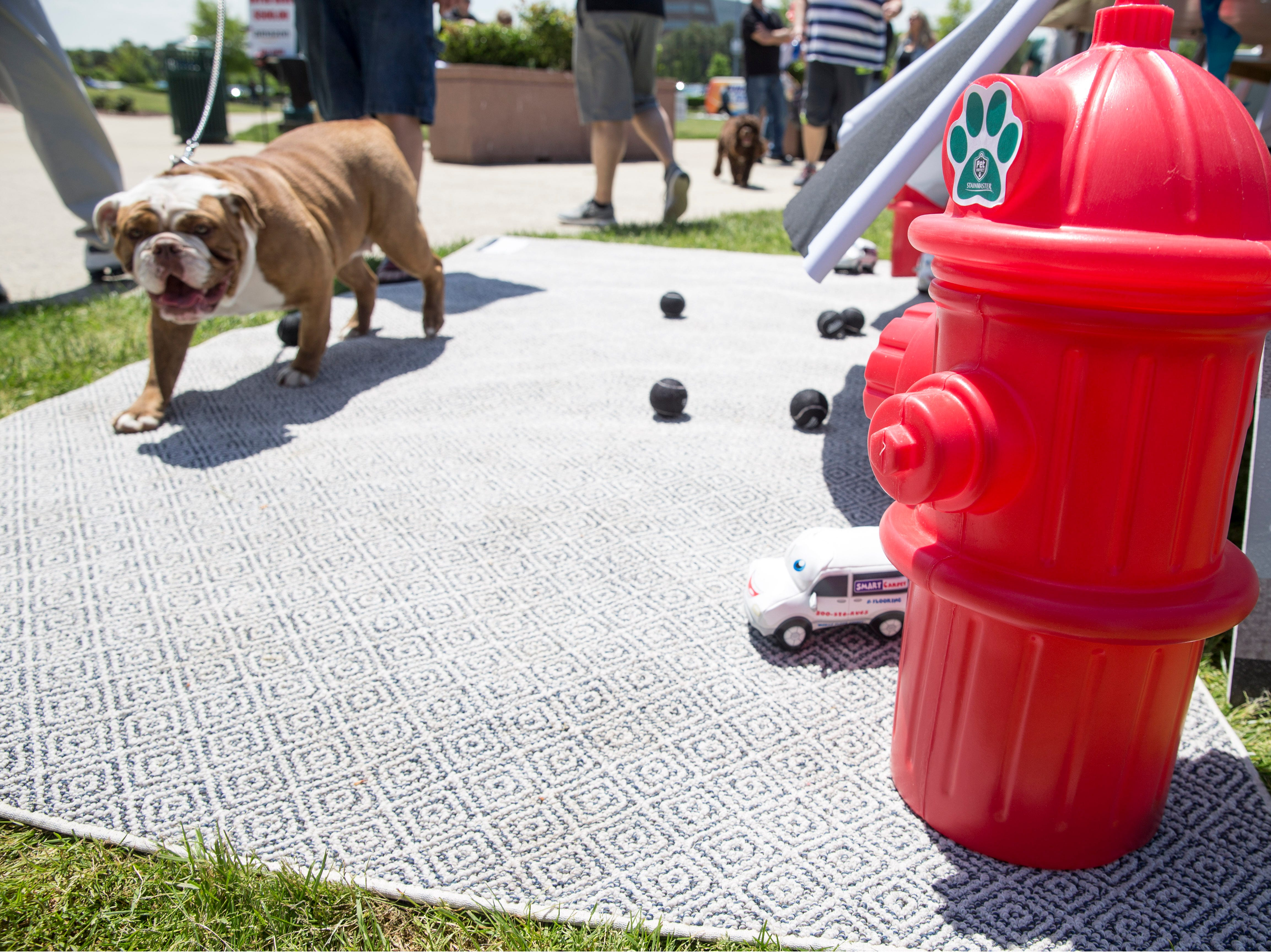 """Lakewood BlueClaws Bark in the Park takes place on stadium grounds prior to the game. Dogs were also allowed to attend the game with a """"pooch pass"""". Many adoption agencies were on hand offering dogs looking for homes to qualified humans. Lakewood, NJSaturday, May 11, 2019"""