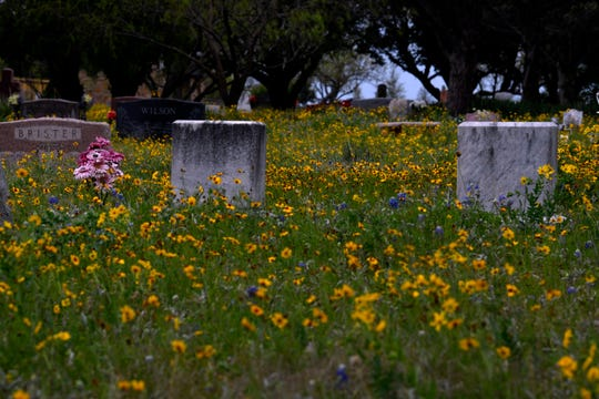 A field of Coreopsis tinctoria is broken up by tombstones at the Buffalo Gap Cemetery.