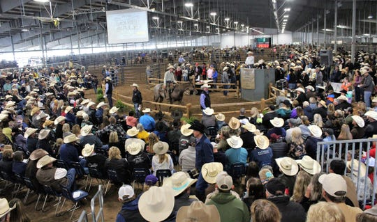 Straw hats were plentiful at Saturday morning's Western Heritage Classic horse sale in the new livestock barn at the Taylor County Expo Center. The horse in the center ring sold for $20,000.