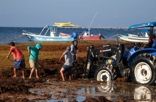 Workers remove sargassum seaweed from the beach in Playa del Carmen, Mexico, Wednesday, May 8, 2019. Shoveling or bulldozing up sargassum once it washes up on shore is a herculean task, as it returns hours later.