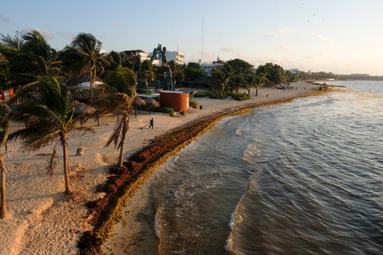 Sargassum seaweed covers the beach in Playa del Carmen, Mexico, Wednesday, May 8, 2019. Local hotel owners and tourism industry workers, which is just about everybody, to some extent, in Quintana Roo, are feeling angry and abandoned by the federal government.