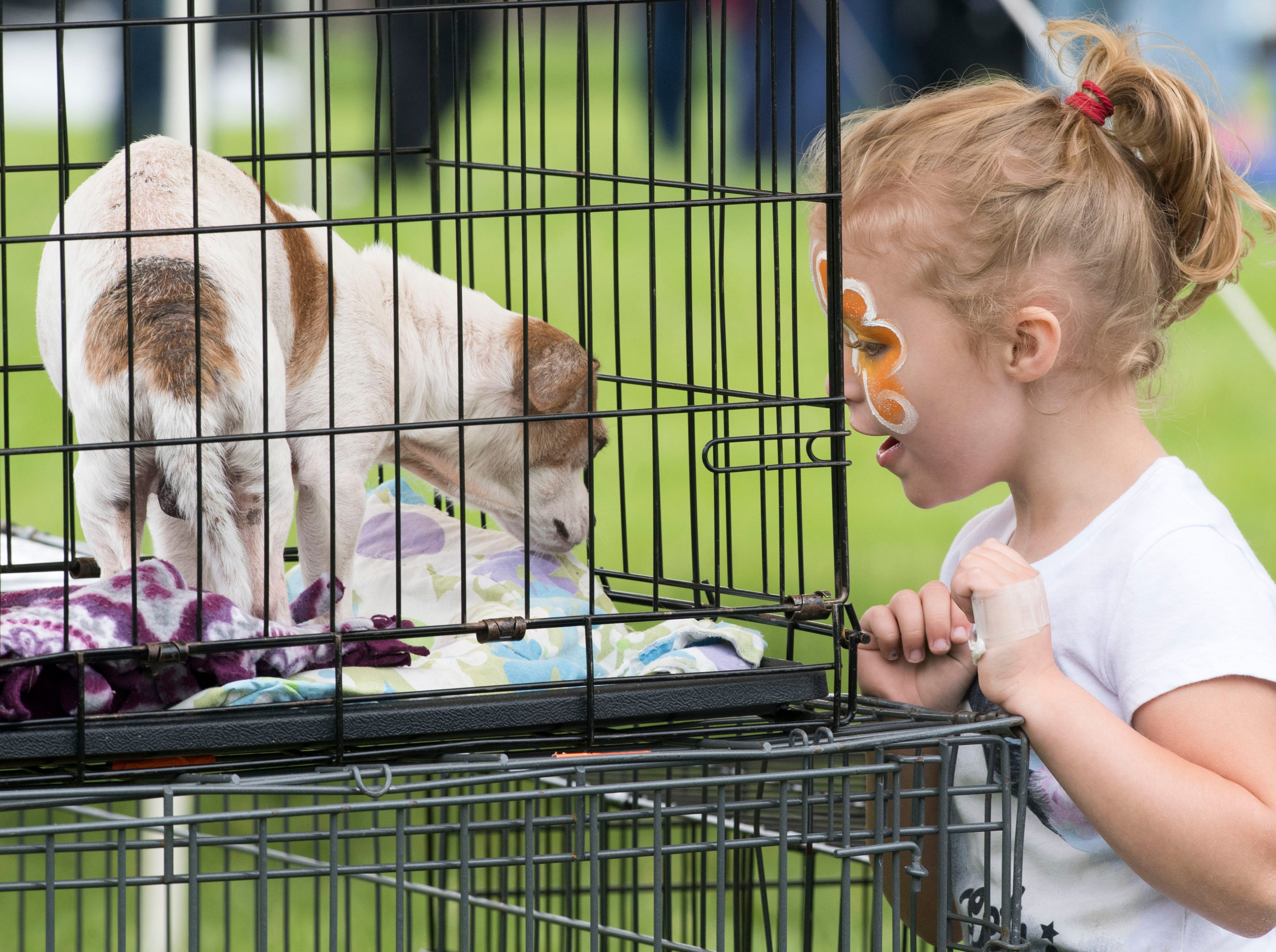 Naomi Storch, 5, interacts with a dogs available for adoption during the 2019 Spirit Fest Saturday, May 11, 2019. Spirit Fest is a day of fun and activities that benefits the Spirit Medical Fund which raises money for the Evansville Animal Care and Control shelter.