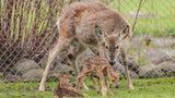 Baby deer born in Lakeside Park