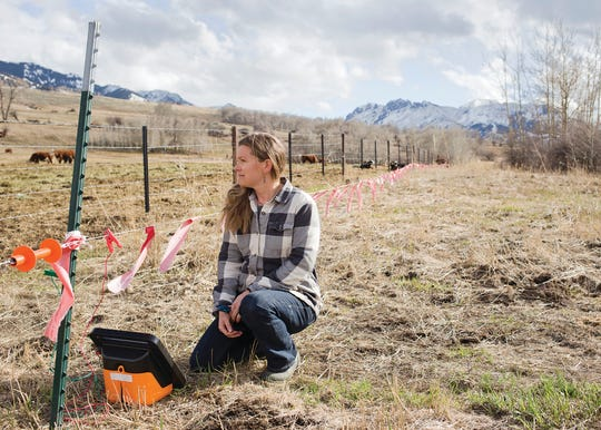 """Malou Anderson-Ramirez, a third-generation rancher in the Tom Miner Basin, kneels by a calving pasture on the Anderson Ranch on April 24. The pasture is encircled by electrified fladry — basically rectangular red flags sewn to a strand of electric fencing — designed to deter predators. Since the ranch started using fladry eight years ago, Anderson-Ramirez said it has been """"100% effective."""" (Joseph Bullington/Livingston Enterprise via AP)"""