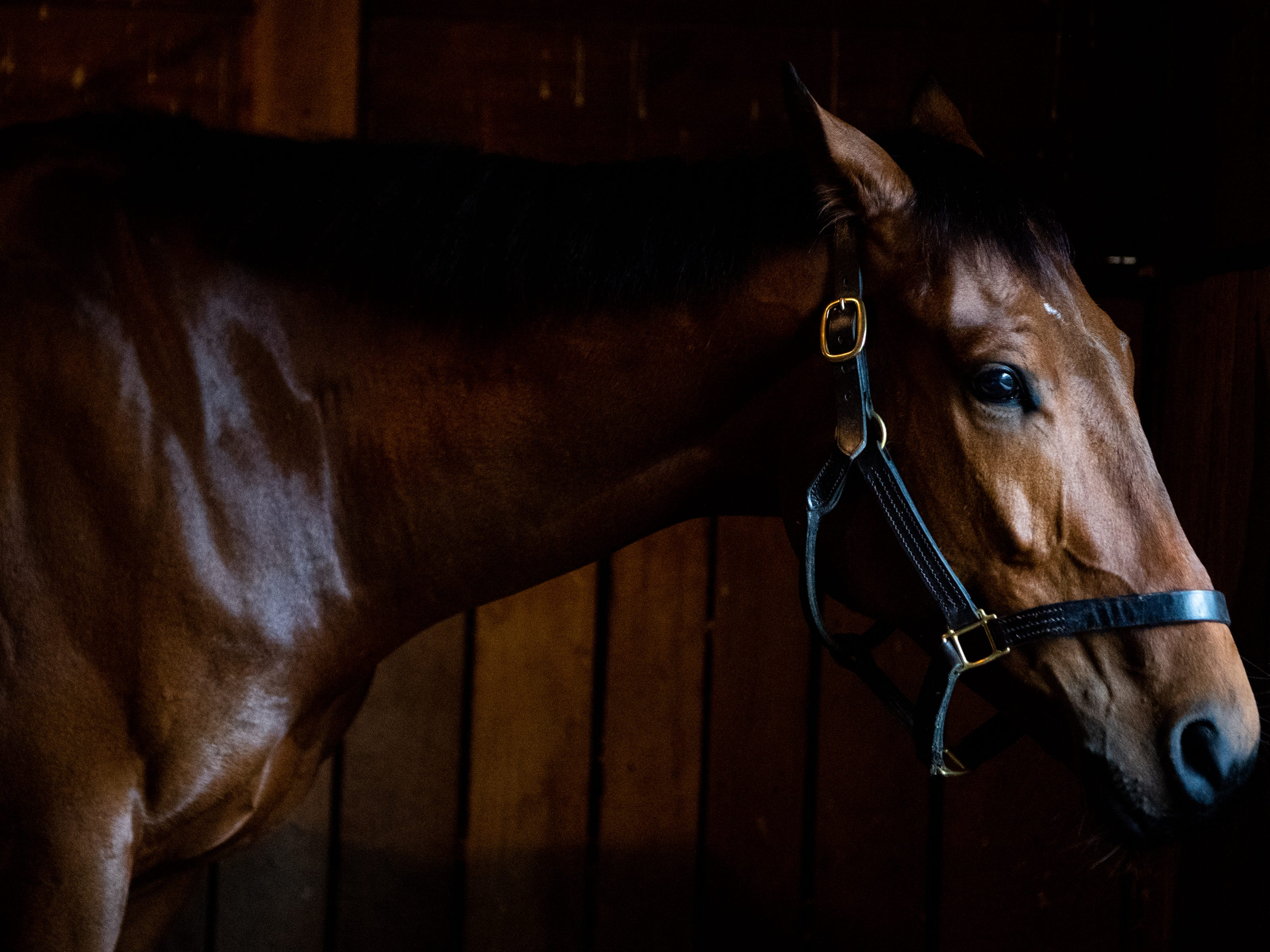 Gabe Breeze waits in the stables during the Iroquois Steeplechase at Percy Warner Park Saturday, May 11, 2019, in Nashville, Tenn.