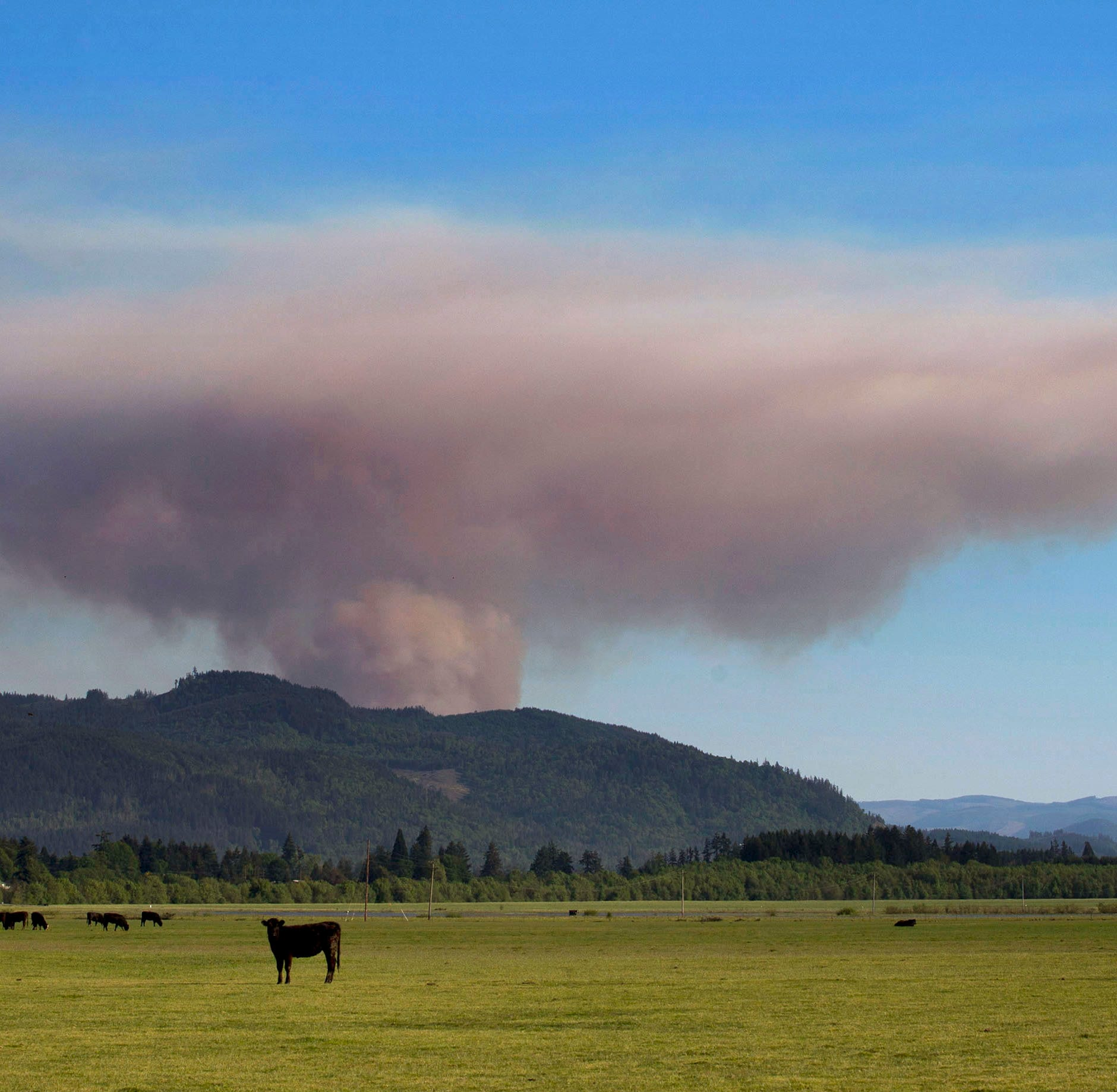 Wildfire near Cottage Grove in Lane County at 75.6 acres, 50 percent contained