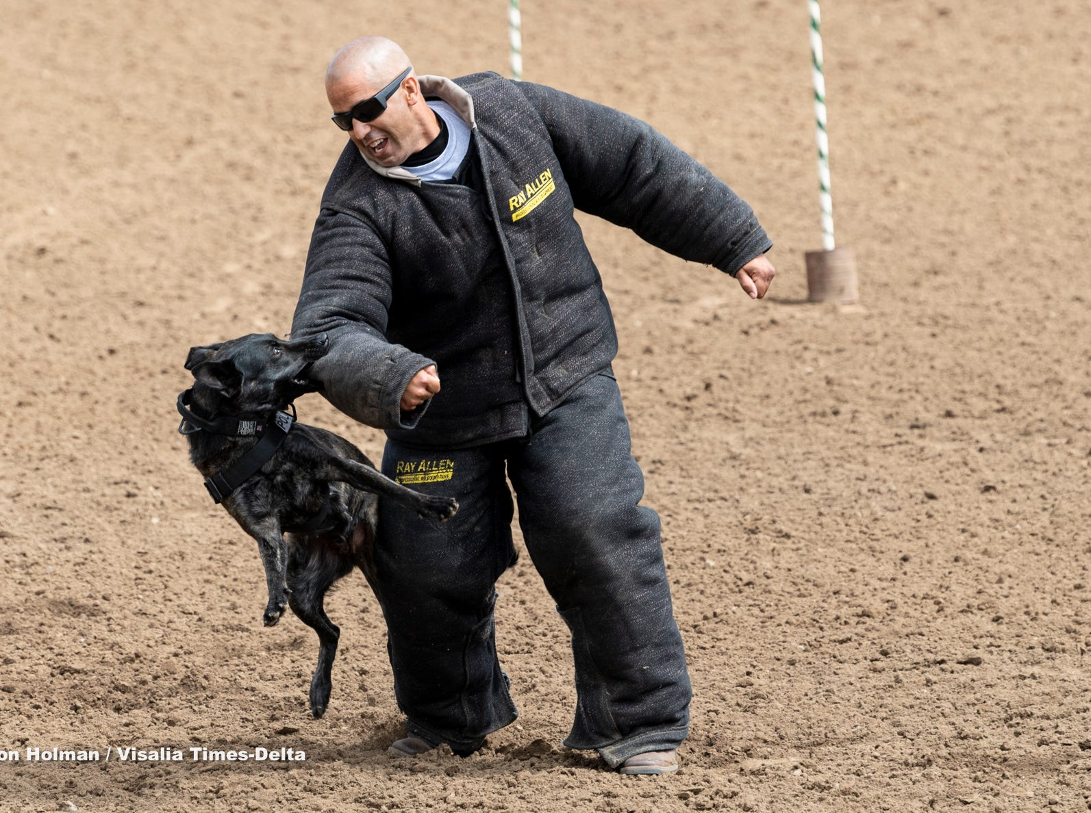 """Woodlake police K-9 Lea takes down a """"bad guy"""" for a demonstration during Woodlake Rodeo's first """"High-Five Rodeo"""" on Friday, May 10, 2019. Participants from Exeter's Center for Discovery and Learning were paired up with real-life cowboys and cowgirls and other performers to experience modified rodeo-related stations in the rodeo arena."""