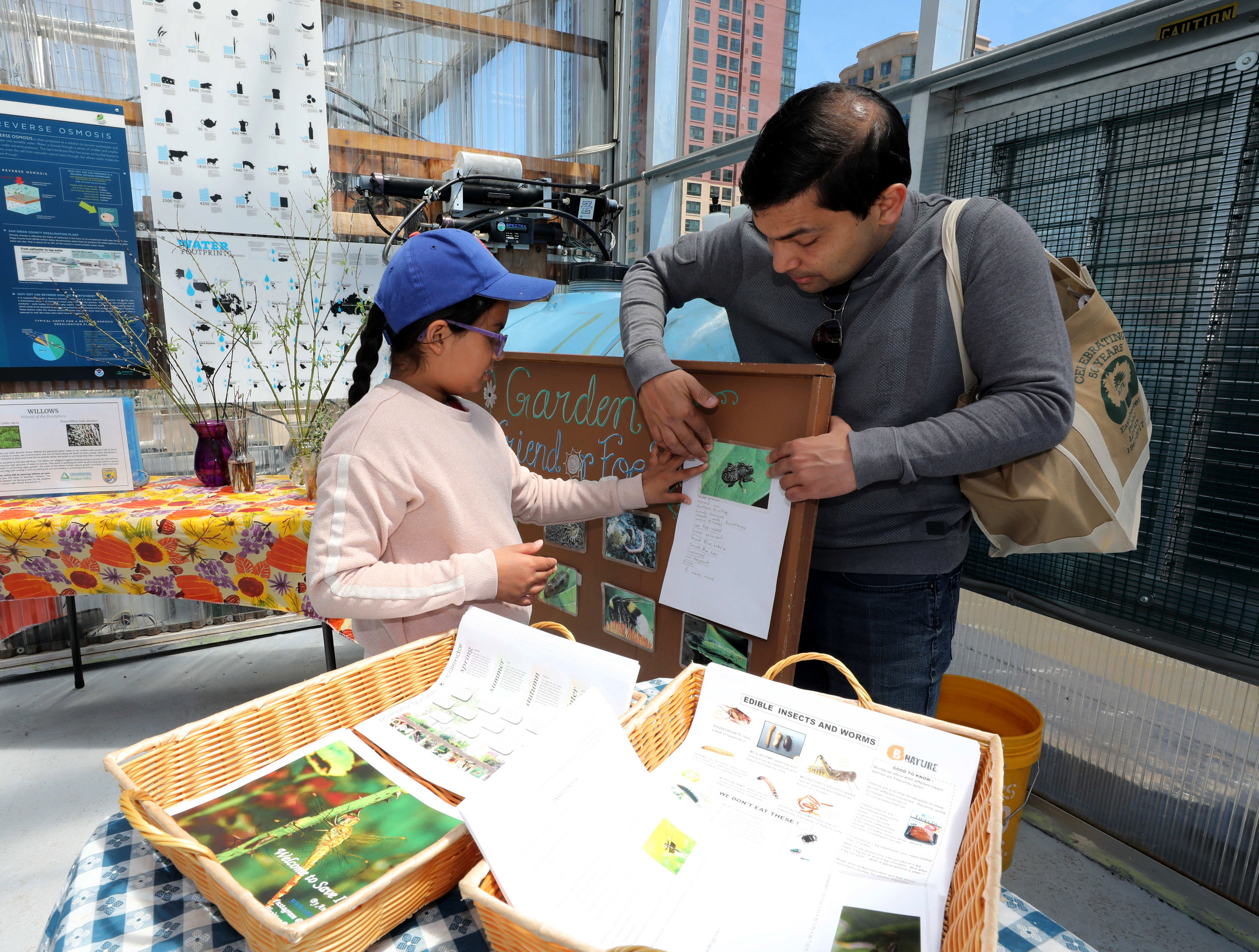 """Anusha Vaish, 8 and her dad Prakhar Vaish from Eastchester, set up the """"insect"""" exhibit as the Science Barge enjoys its 11th annual opening on the Hudson River in Yonkers, May 11, 2019. The floating environmental education center  has undergone an almost $1million enhancement, completed over the past two years."""