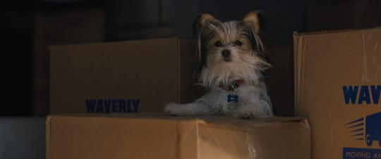 "Max, a Biewer terrier (voiced by Josh Gad), was played by four dogs in ""A Dog's Journey."""