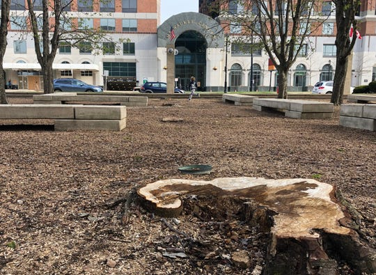 A boy runs near tree stumps in the sunken grove outside the Marcus Center for the Performing Arts Saturday in Milwaukee. Crews cut down nearly 20 trees Saturday morning as part of a planned renovation to convert the space into a grassy lawn.