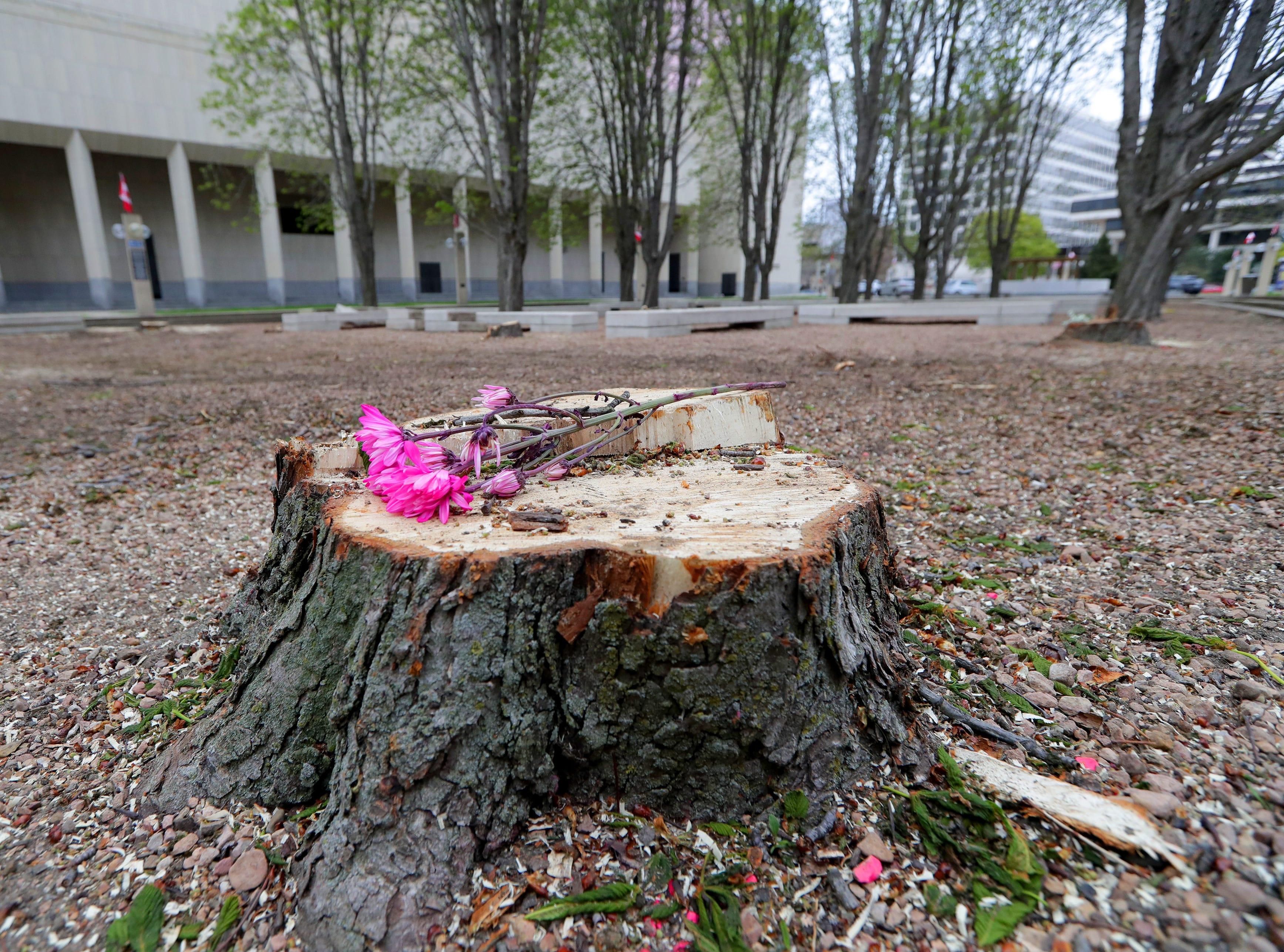 A flower has been placed on a tree stump in the sunken grove outside the Marcus Center for the Performing Arts in Milwaukee.
