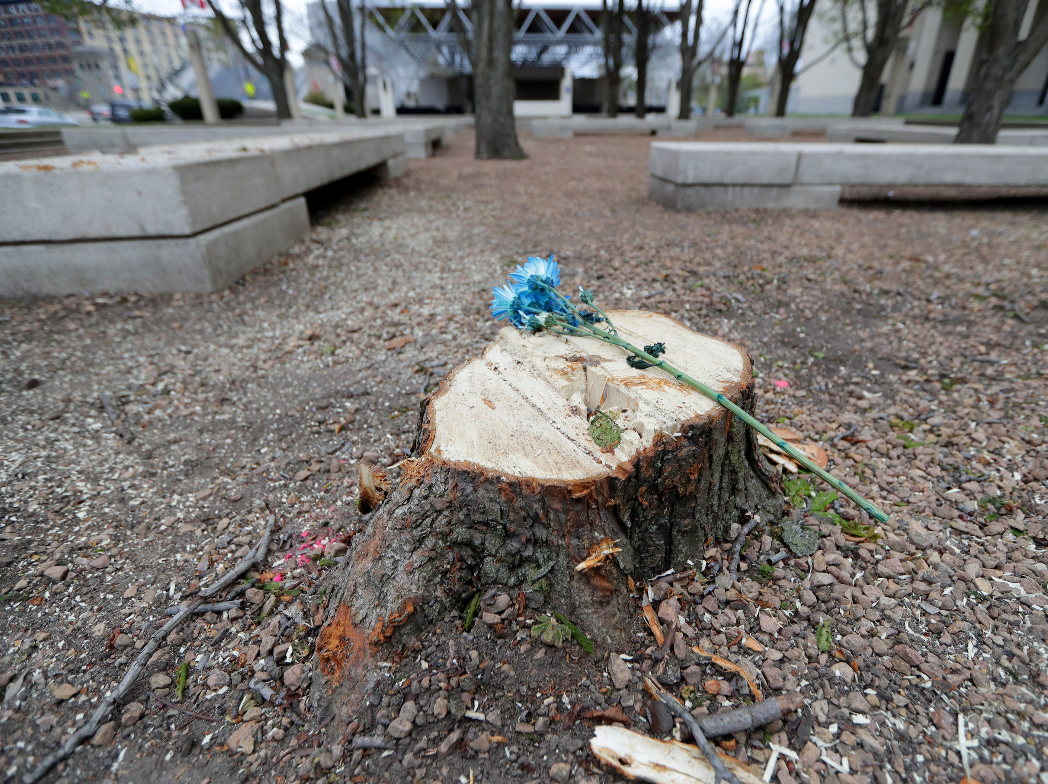Flowers have been placed on tree stumps in the sunken grove outside the Marcus Center for the Performing Arts.