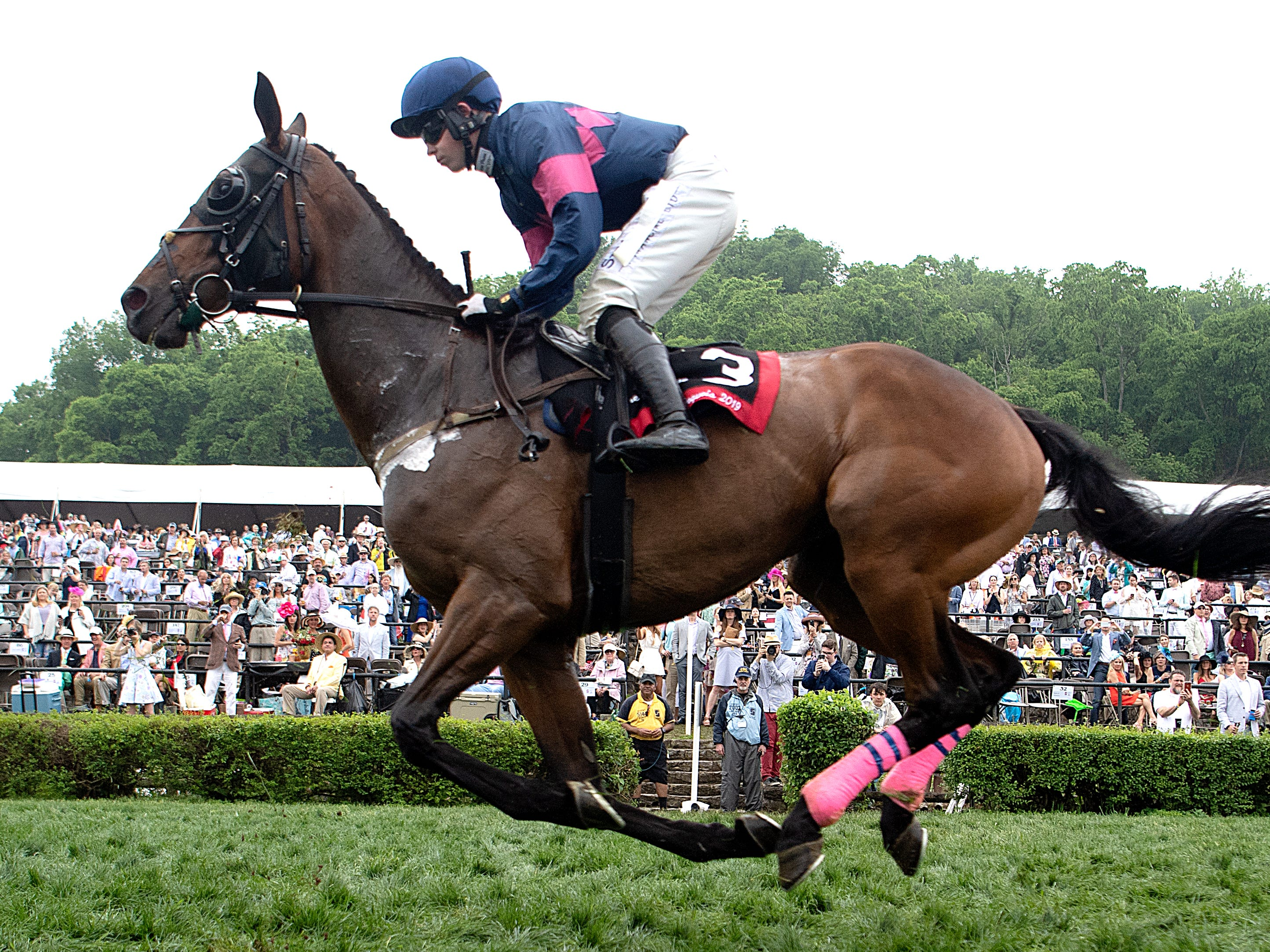 A horse races in the last race at the 78th Iroquois Steeplechase at Percy Warner Park in Nashville on Saturday, May 11, 2019.