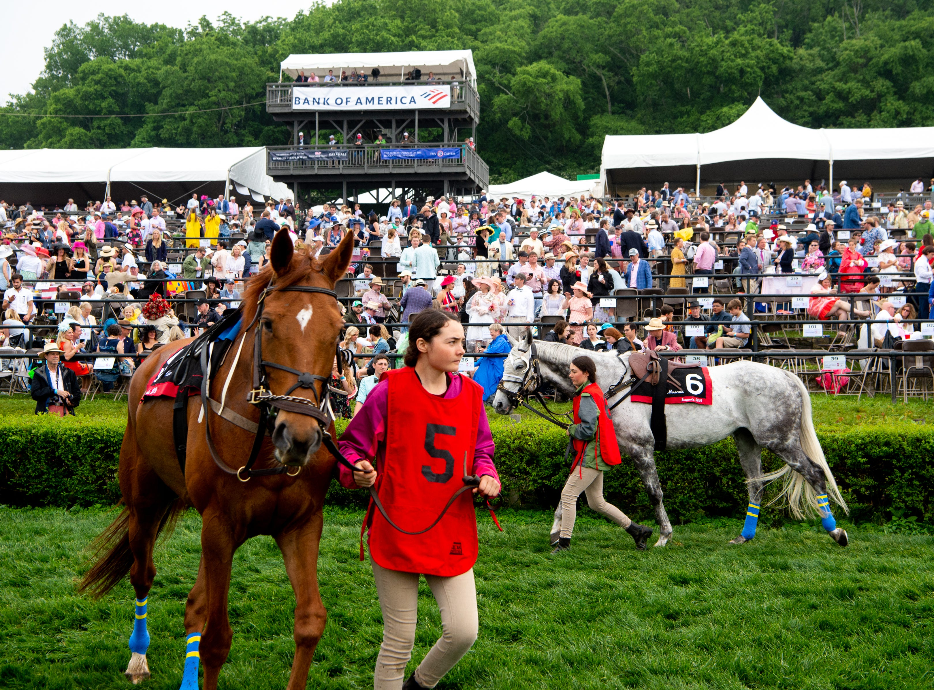 Horses are walked before the seventh race of the Iroquois Steeplechase at Percy Warner Park Saturday, May 11, 2019, in Nashville, Tenn.