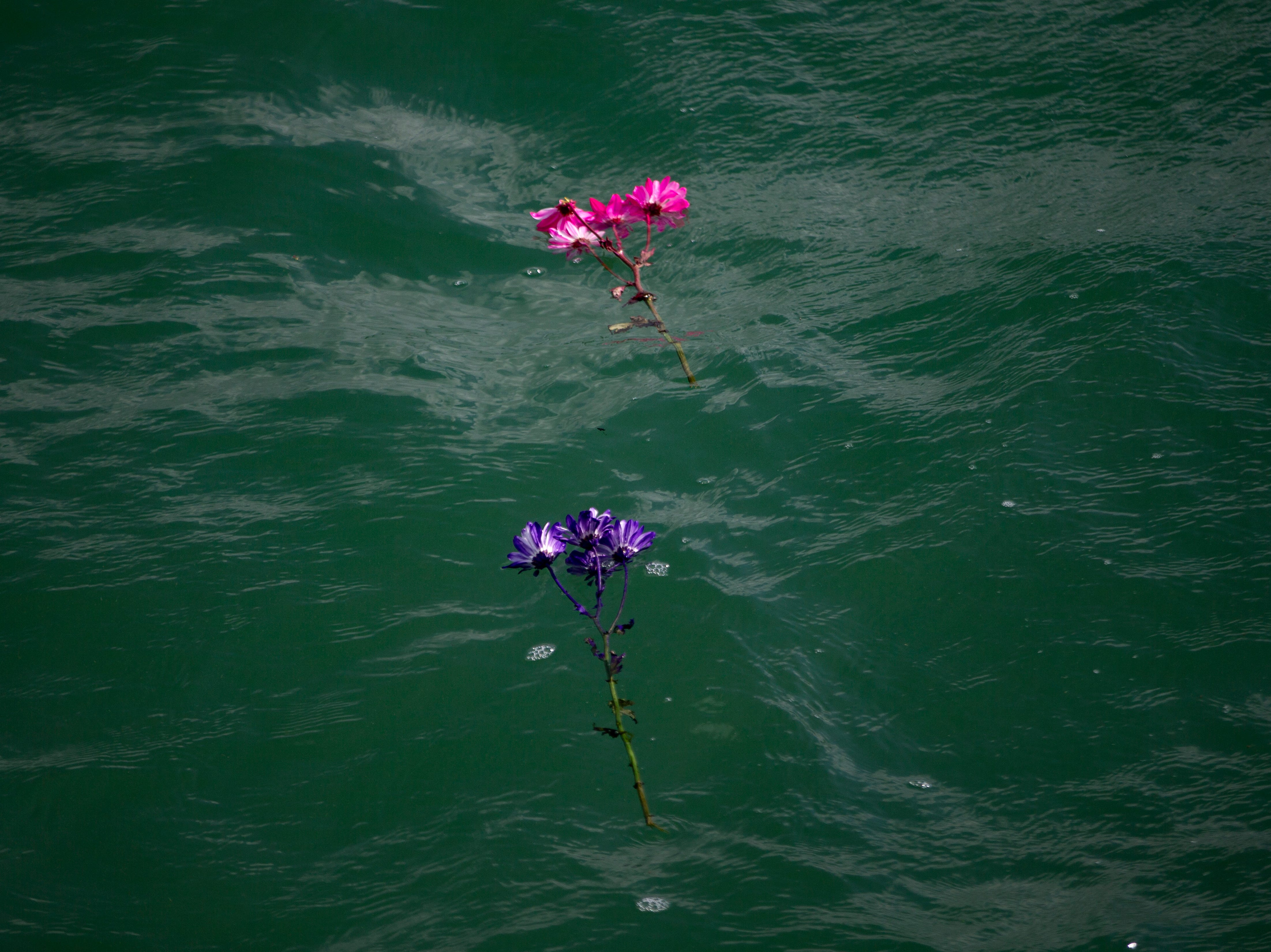 Flowers float in the Gulf to honor children who have died during the annual Moms' Celebration of Life event, Sunday, May 12, 2109, at the Naples Pier.