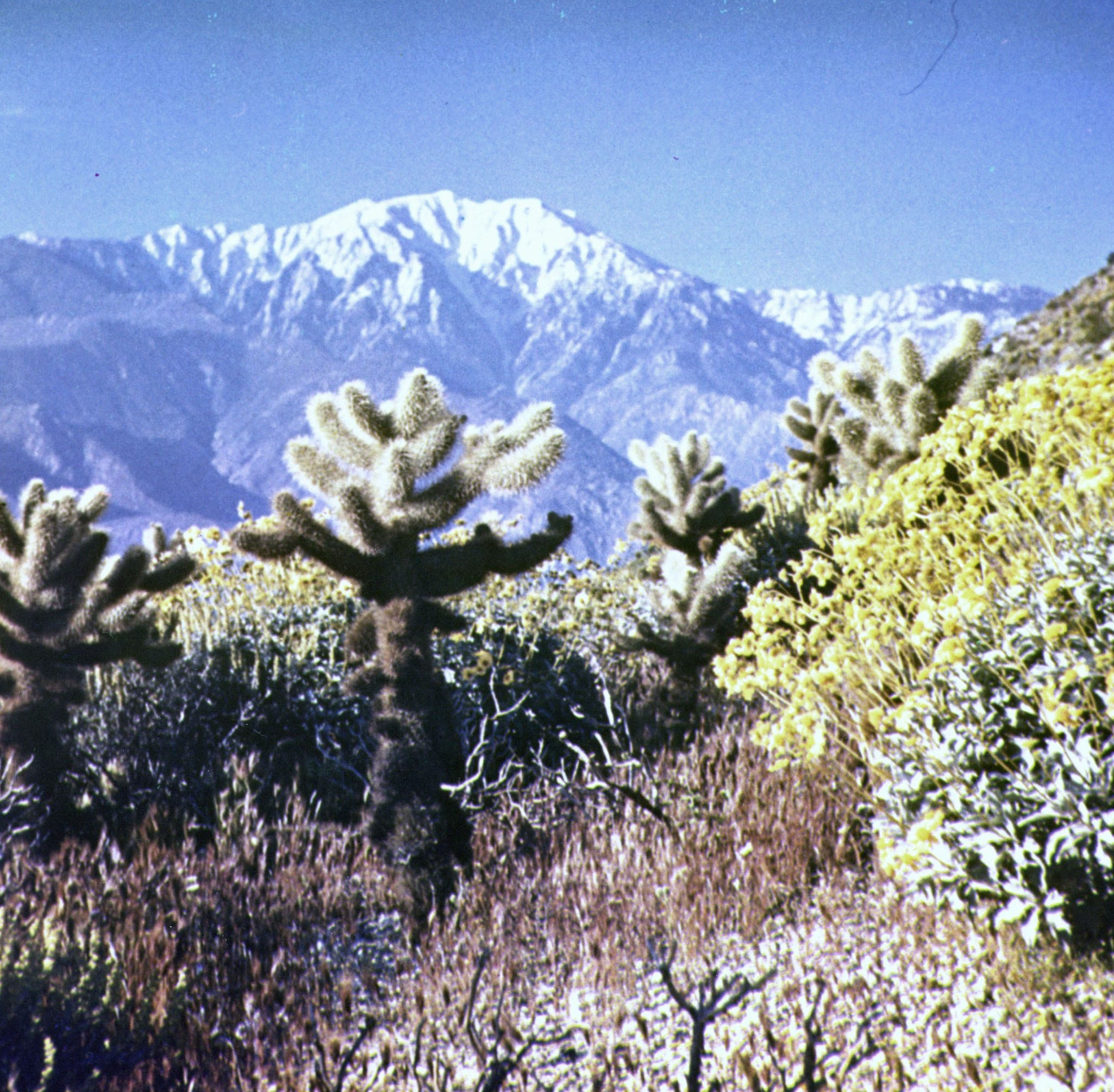 How Minerva Hamilton Hoyt saved Joshua Tree park for future generations