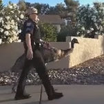 Emu on the loose! Bemused Phoenix police retrieve lost pet