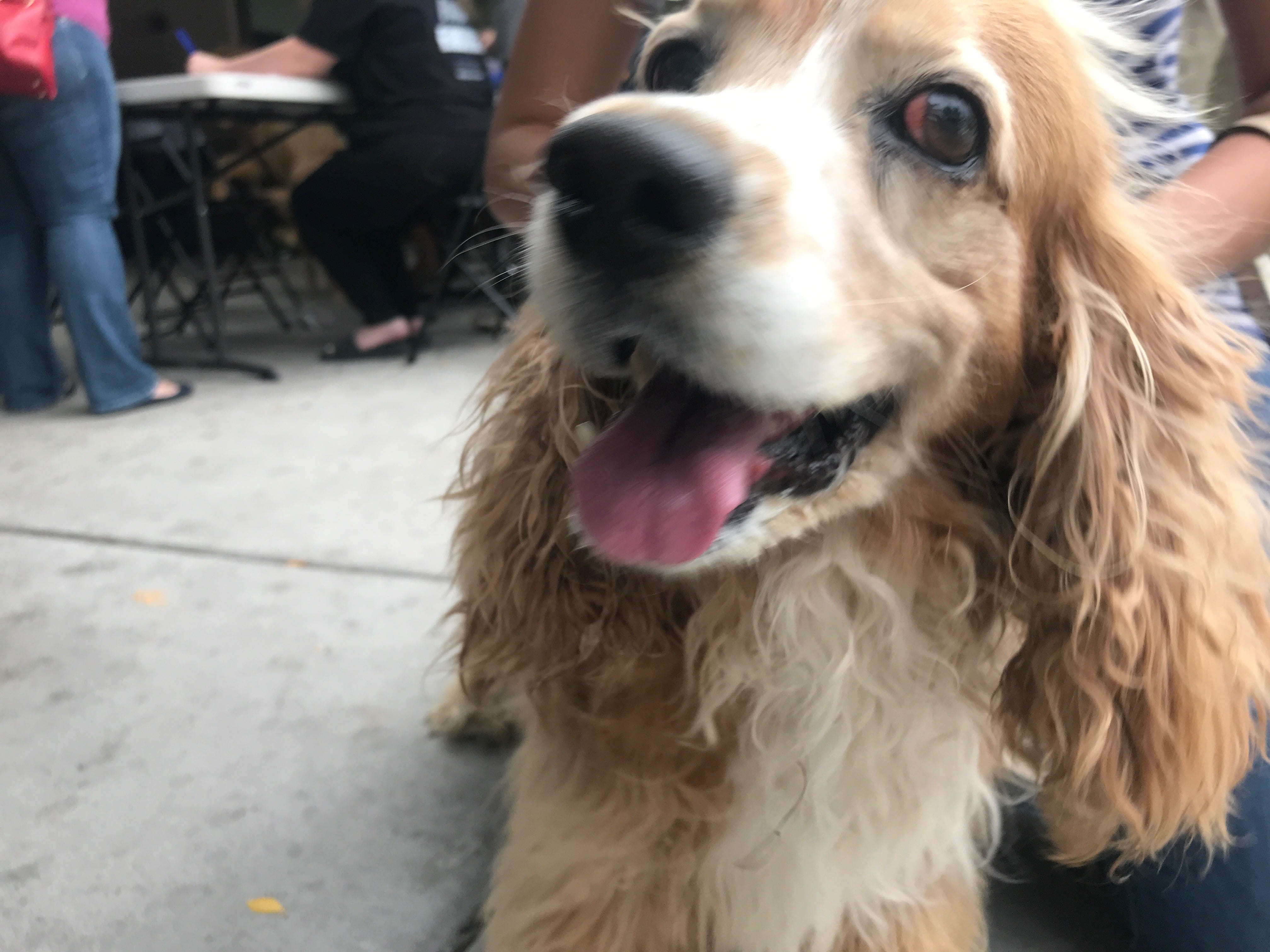 A free event at Bark Avenue in Mesa offered nearly 150 dogs free vaccinations, microchips and other services on Saturday, May 11, 2019.