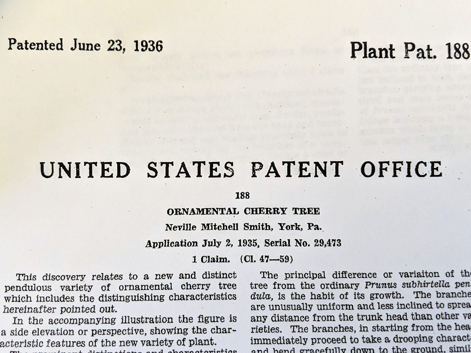 The patent for the ornamental cherry tree dated June 23, 1936.