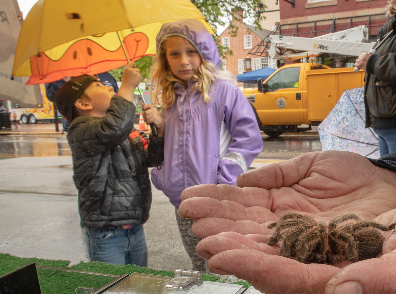 "Two children keep their distance from a 21-year-old rose hair tarantula named Penelope. Ryan Bridge ""The Bugman"" was part of the Kid's Fun Block during the 44th Annual Olde York Street Fair."