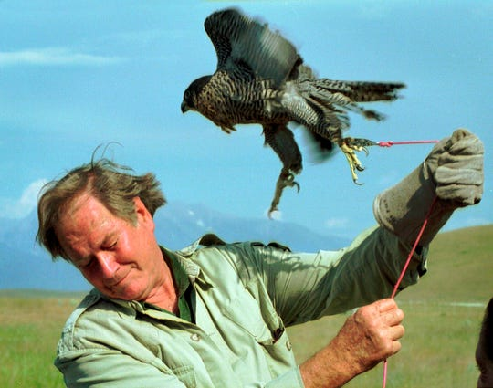 "FILE - In this July 27, 1998, file photo, television personality Jim Fowler ducks to avoid being battered by a peregrine falcon on a tether at the National Bison Range near Missoula, Mont. Fowler, a naturalist who rose to fame on the long-running television show ""Wild Kingdom,"" died peacefully surrounded by family on Wednesday, May 8, 2019, at his home in Norwalk, Conn. He was 89. (Michael Gallacher/The Missoulian via AP) ORG XMIT: MTMIS101"