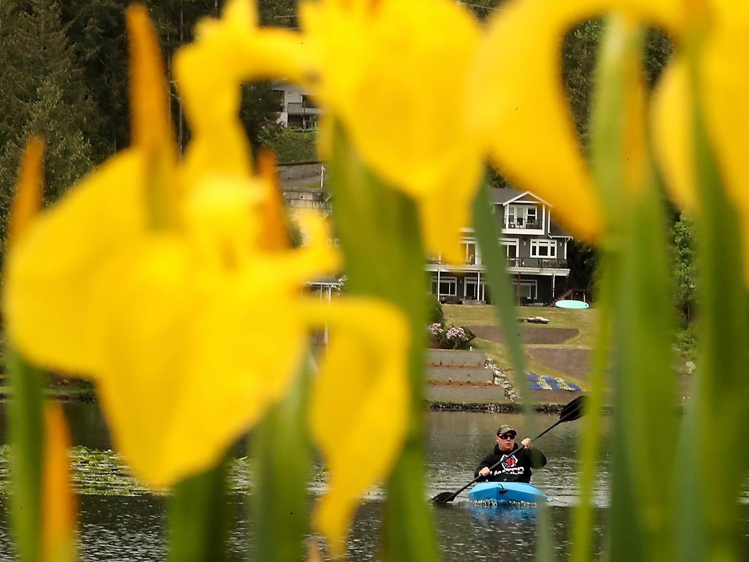 Framed by blooming cattails, Brandon Hampton, of Port Orchard, paddles his kayak toward the shore while fishing at Kitsap Lake on Monday, May 33, 2019.