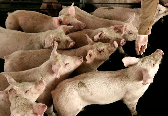 Michigan farmers who produce goods ranging from pork to soybeans to milk say the trade war with China has been costly even before thatcountrythreatened to retaliate with new tariffs effective June 1.