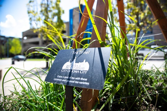 """A sign from the Iowa City Parks and Recreation department invites people to try """"common and unusual tea varieties,"""" Monday, May 13, 2019, in a community planter at City Hall along Washington Street in Iowa City, Iowa."""