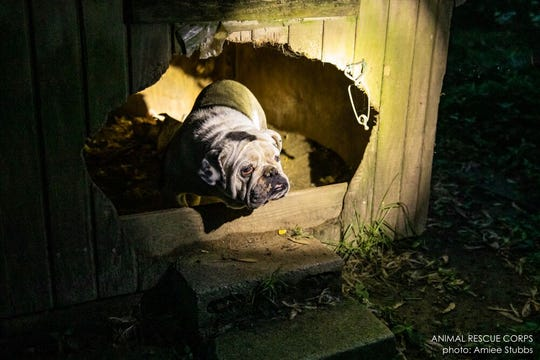 Animal Rescue Corps and the Putnam County Sheriff's Office rescued more than 42 animals from neglectful conditions at a Cookeville home. The property owners were allegedly breeding the animals for sale.