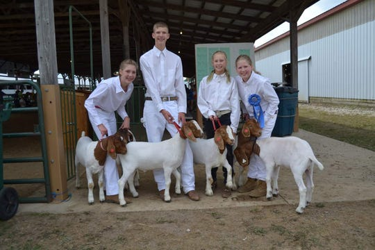 The siblings in the Williams family of Perry - Hayley, 15, Justin, 16, Karley, 11, and Brenna, 13 - with their goats at the Livingston County Fair last year. Justin wants to open his own farm in the future.