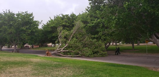 The wind from a storm Sunday, May 12, 2019, uprooted at least one tree and damaged several carports, sheds, roofs and vehicles.