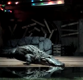 Meet Mighty Mike, the 800-pound alligator that's OdySea's newest, and largest, resident