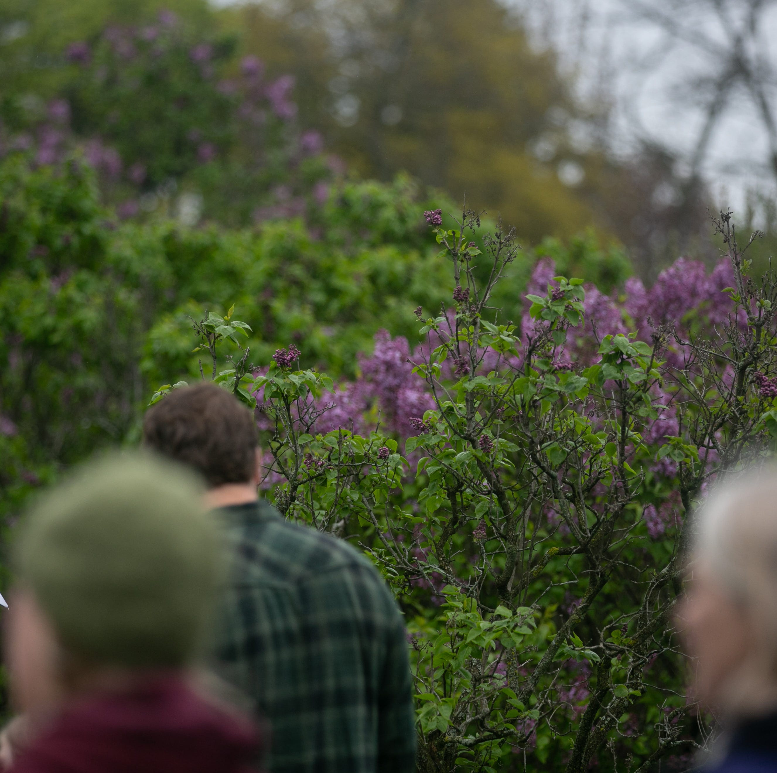 Rochester Lilac Festival canceled Monday due to rain; concerts moved to Anthology