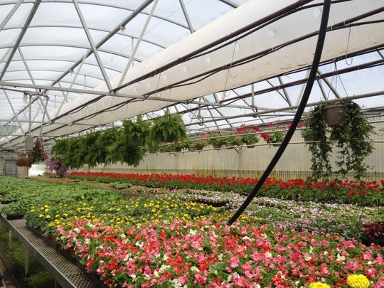 Garden Factory in Gates is one of many places to get plants for your garden.