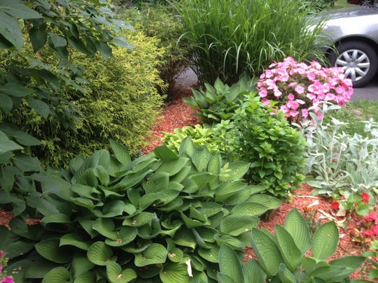 Hosta plants are low-maintenance perennials.